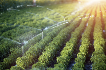 What Are Irrigation Systems?